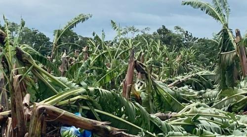 Tropical Cyclone Niran Grants